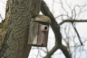 Vogelkasten am Baum