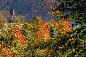 Hochsitz im herbstlich gefärbten Mittelgebirgswald